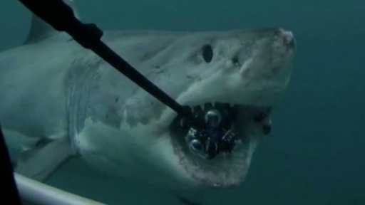 What Do You Do When a Giant Shark Eats Your New Fancy Camera?