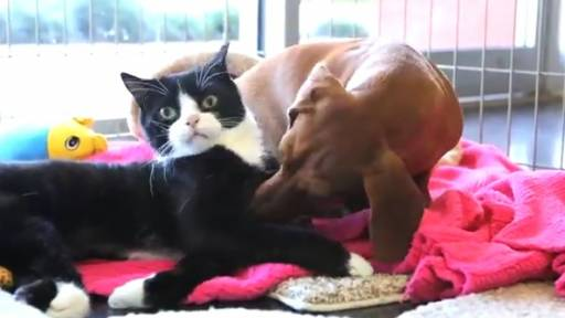 'Idgie' the Dog and 'Ruth' the Paralyzed Cat Have a Special Bond