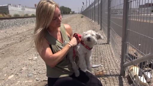 Abandoned Puppy Rescued From Railroad Tracks Just in Time