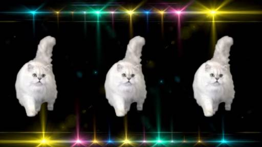 'The Kitty Anthem' Is For All You Fine Felines Out There