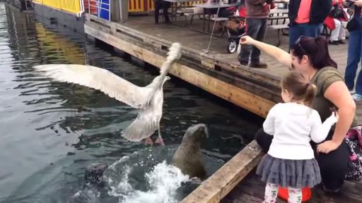 That Pesky Fish Thief!