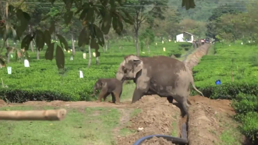 Sweet Rescue of Baby Elephant by Momma