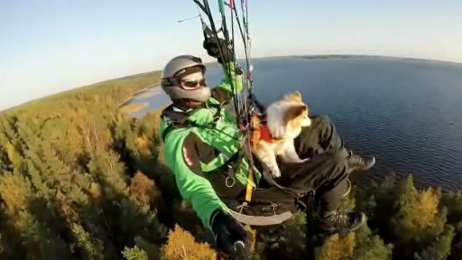 Paragliding Must Be the Ultimate 'Head Out the Car Window' Experience for Dogs!