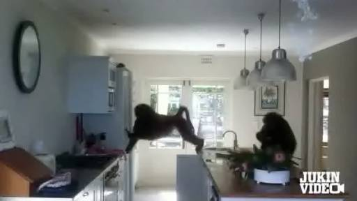 Troop of Baboons Breaks in and Destroys South African Home