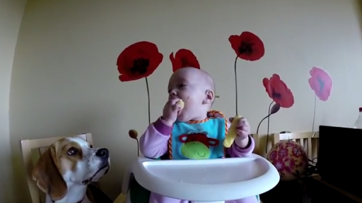 Dogs and a Baby Bring the Smiles With Their Cuteness