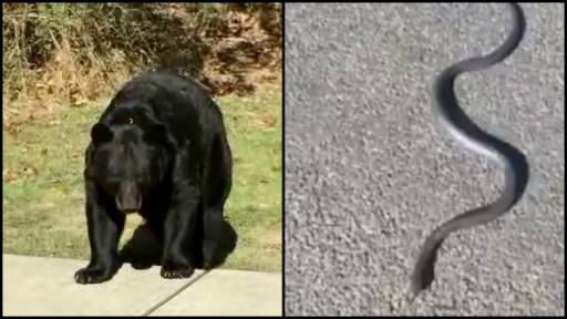 Close Encounters of the 'Beary' Slithery Kind...Hilarity Ensues