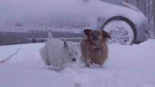 Daily Pet: Blizzard Dogs