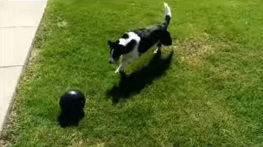 Dog Loves to Play Soccer
