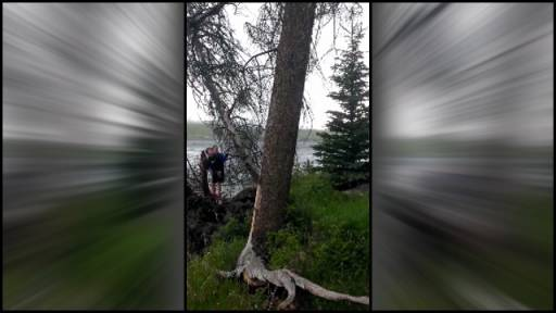 Falling Tree Barely Misses Crushing Boy