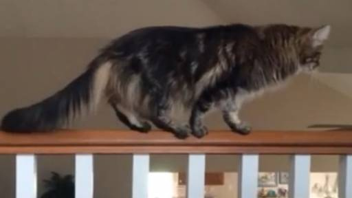 Cat Tries Out for the Circus
