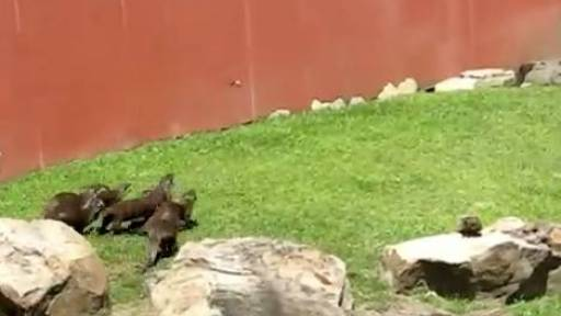 Otters Chasing Butterflies