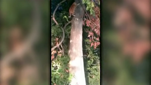 Cat Rescues Itself From the Tree