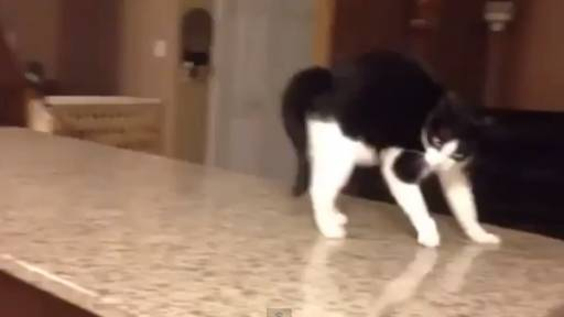Daily Pet: Watch Out for the Attack Cat!
