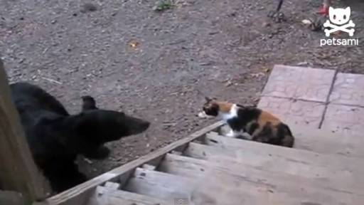 Daily Pet: Fearless Cat Stands Up to Bear