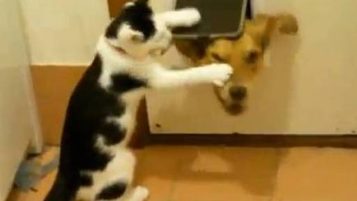 The Daily Pet: Why Cats Suck!