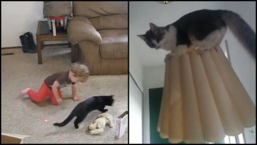 The Entertainment Today Is Brought to You By Cats and Kids