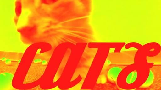 Please Adopt Us: Homeless Cats Get a Weird Music Video
