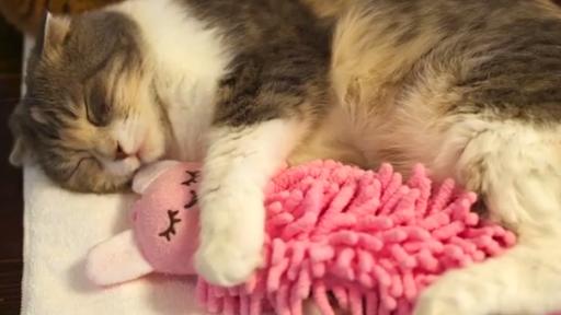 Cute Cuddly Cat