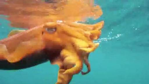 Cuttlefish Aren't So Cuddly