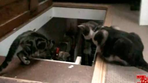Daily Comeback: Kitten Gets Thrown Down Ladder