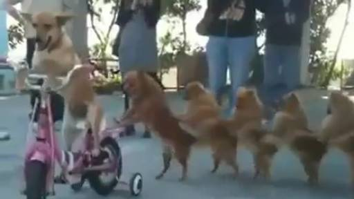 Daily Huh? Top Dog on Bike and 6 Others in Conga Line