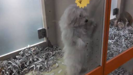 How Much Is That (Dancing) Doggy in the Window?