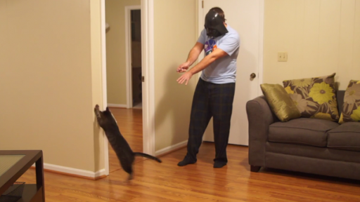 Using the Force to Control the Cat