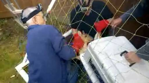Deer Causes a Fuss, But Is Saved by Rescue Crew