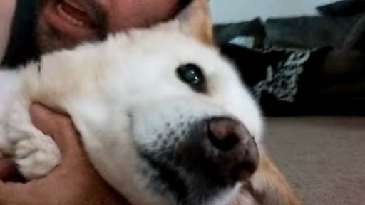 Man Reenacts Cliché War Movie Death Scene With His Dog