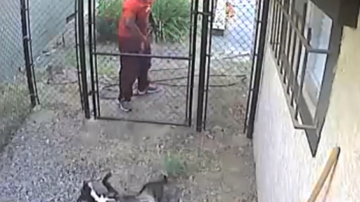 Infuriating Footage of Animal Abuse Has Happy Ending
