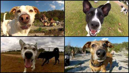 Alright GoPro, These Dogs Are Ready for Their Close-Up