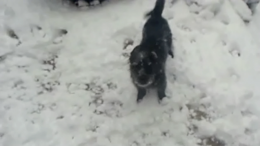 Dog Loves the Snow More Than You Do