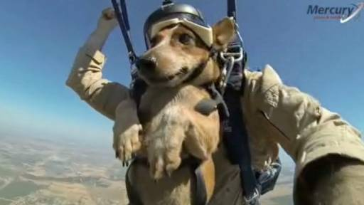 Dog Skydives Better Than Most Humans