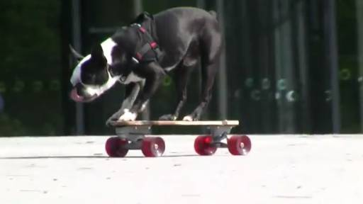 Daily Pet: Amazing Skateboarding Dogs