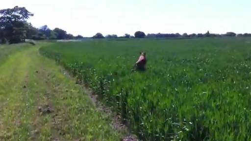Daily Pet: Field of Doggie Dreams