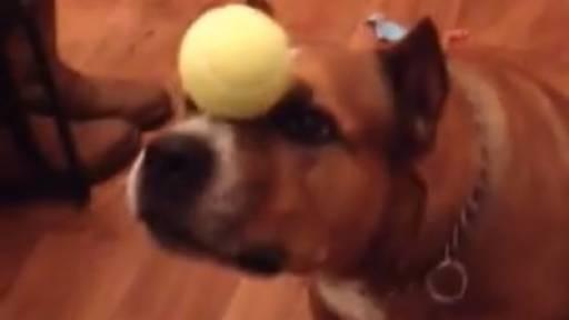 Dog Has a Ball on Christmas Morning