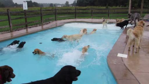 Dogs Enjoy a Lovely Pool 'Pawrty'