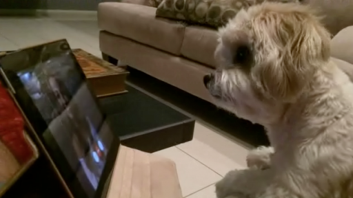 Little Dog Is Baffled by Technology