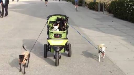 Daily Pet: An Interesting Dog Walk