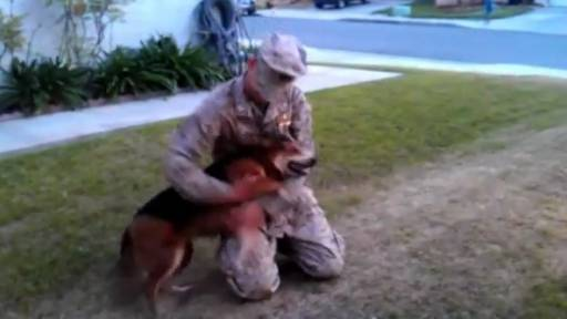 Daily Pet: Dog Welcomes Home Sailor