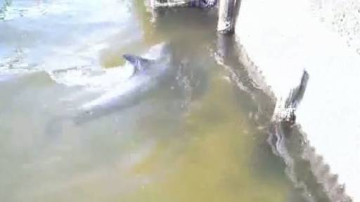 A Dolphin Hanging Out