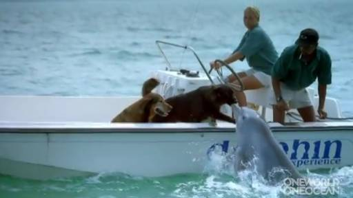 Daily Pet: Flipper Kisses Fido