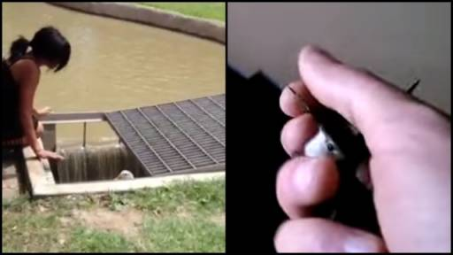 A Duck and Hummingbird Are Rescued By Human Friends