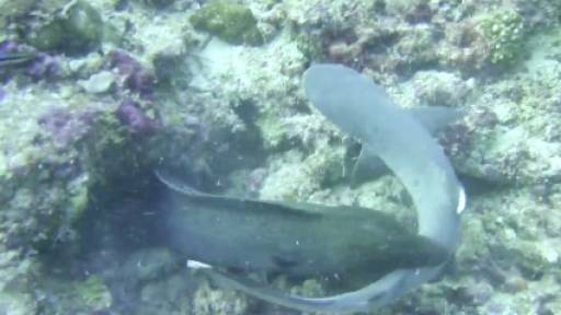 Eel vs. Shark: The Underwater Fight for the Ages