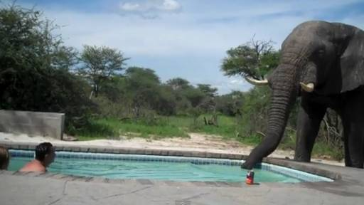 Daily Comeback: Elephant Crashes the Pool Party