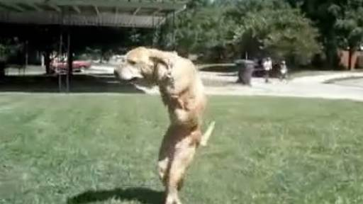 Faith, the Two-Legged Dog, is Retiring