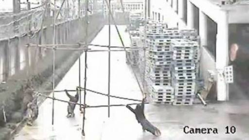 GRAPHIC: Painters Get Electrocuted While Moving a Scaffold