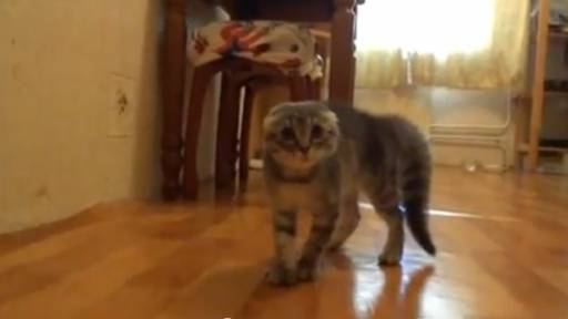 Daily Pet: Funny Kitty Cat