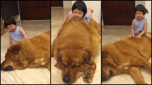 Playtime With a Gentle Giant