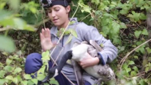 Rescue Team Saves Goose With Badly Broken Wing